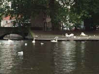 patos y cisnes acompañan el delicioso viaje