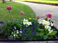 el paseo que ronda el castillo está jalonado de preciosas jardineras