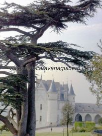 Castillos Loira - Amboise - patio