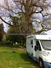 llegamos a Brantôme, nos recibe este viejo y desnudo coloso cuyo tronco alcanza casi 3m de diámetro