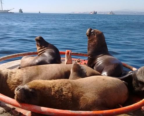 Fauna local descansando sobre una boya a la salida del puerto.