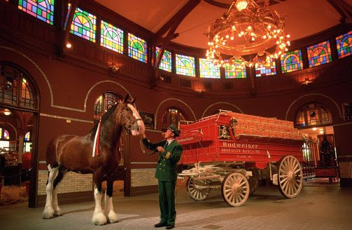 Historic Budweiser Clydesdale Stable
