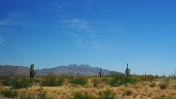 Saguaros (cactus columnares) en Arizona