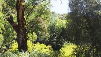 Bosque de ribera a lo largo de Nacimiento Road