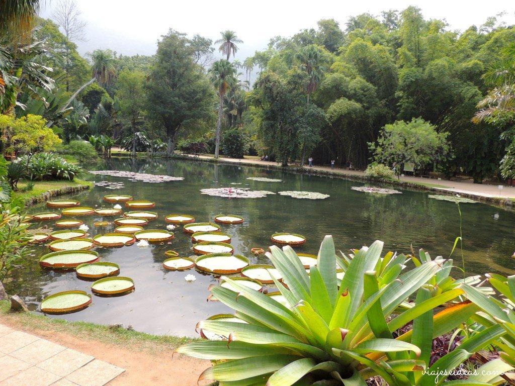 Jard n bot nico de r o de janeiro entre monos y palmeras for Botanico jardin