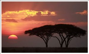 viajar_a_tanzania_4740-Safaris_con_estilo-6