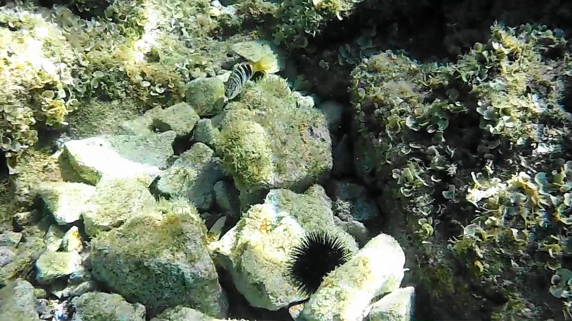 VIDEO: SNORKEL EN LABADUSSA (CROACIA)