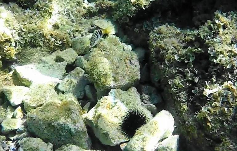 Snorkel en Labadusa (Croacia)