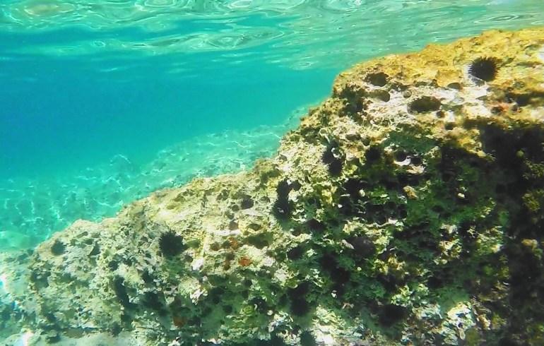 Snorkel en Maslinica, isla de Solta (Croacia)
