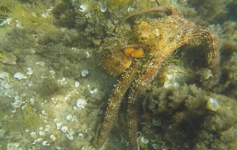 Snorkel en Isola Bella, Taormina en Sicilia (Italia)
