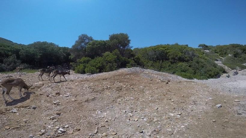 Isla de Sapientza, frente a Methoni (Grecia)
