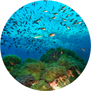 Costa Brava, fondo marino
