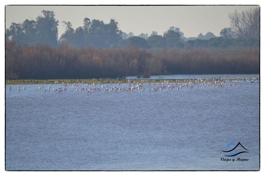 ver aves en Doñana