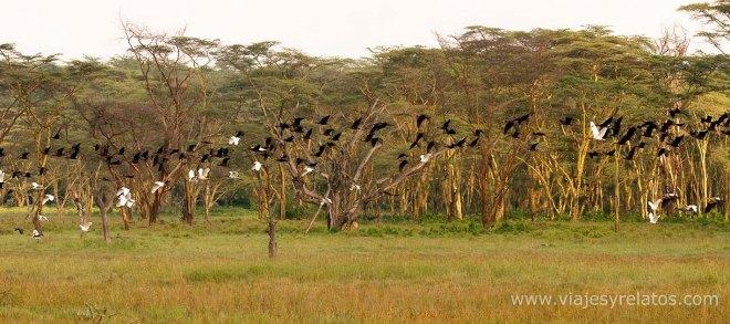 Nakuru-birds
