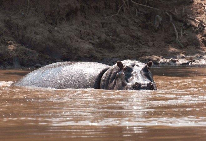masai-mara-rinoceronte