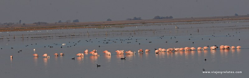 flamencos-laguna-melincue