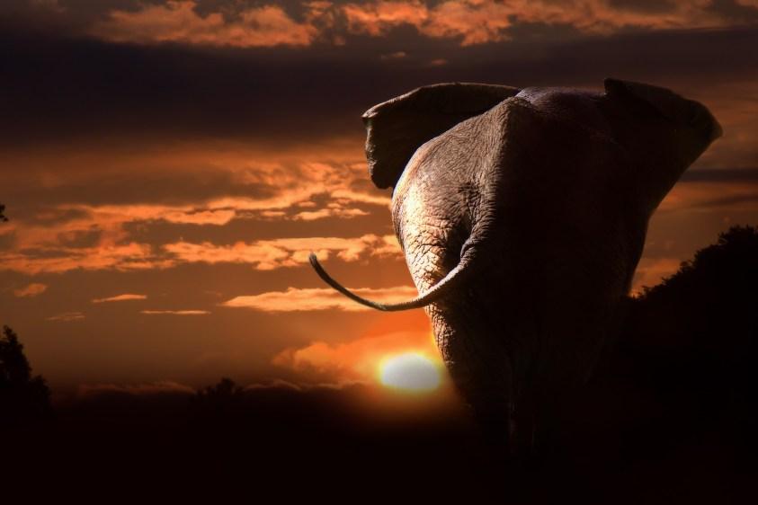 elephant-748288_1920 (1)