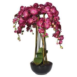 Bright pink orchid in black bowl