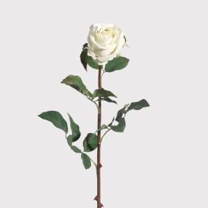 White velvet rose stem