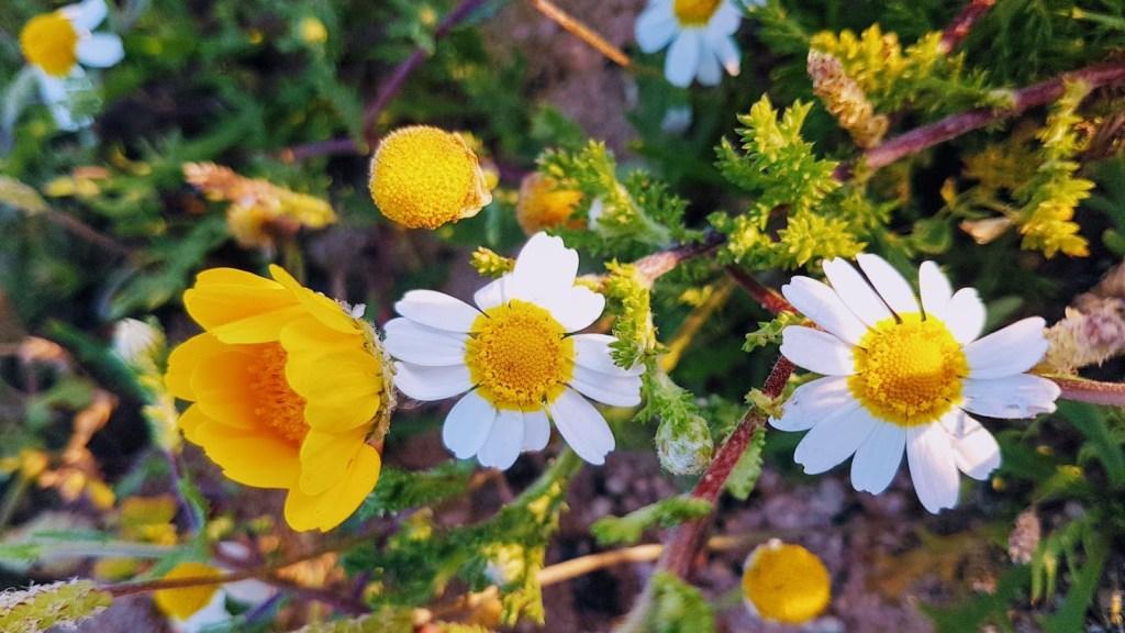 Portugalin katukuva. Kevät Algarvessa, Falésia.