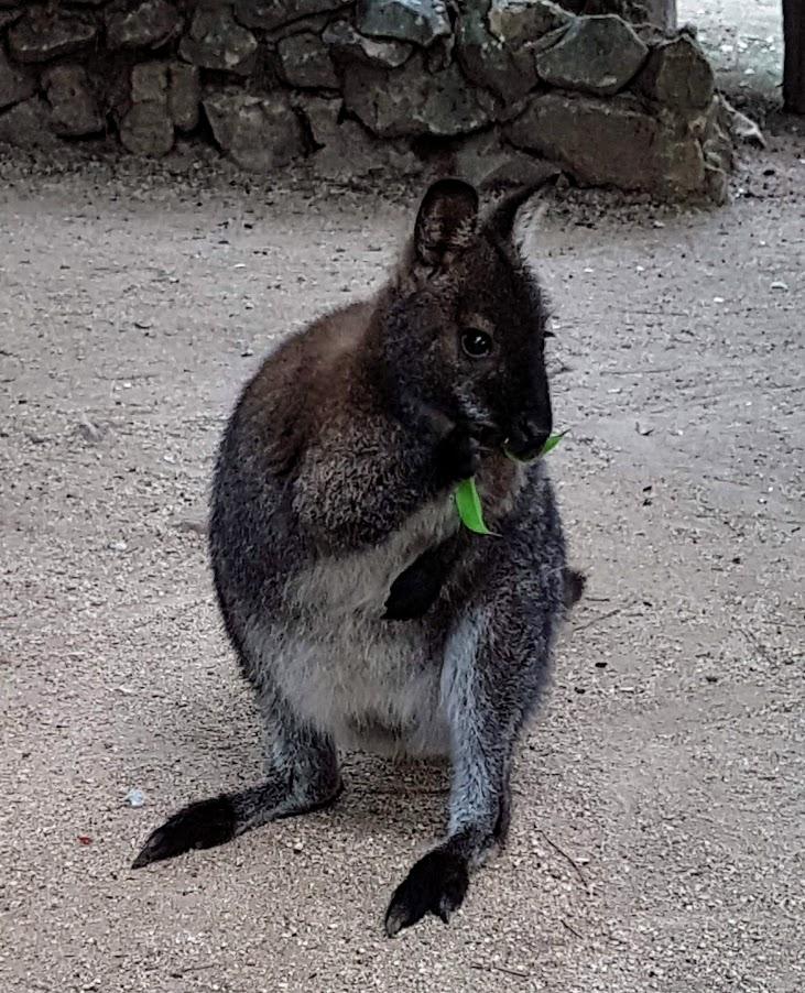 Onnistunut perheloma Algarvessa Lagos Zoo