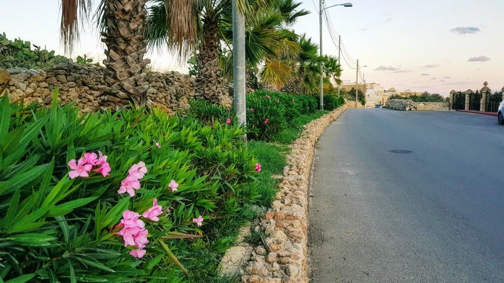 Koti Gozolla, Qala