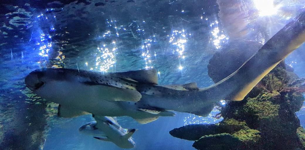 Meri - Päivän inspiraatiokuva, Malta, Malta National Aquarium