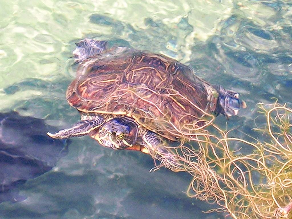 Elämäni paras lomamatka Barbados Ocean Park