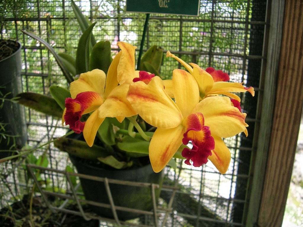 Elämäni paras lomamatka Barbados Orchid World