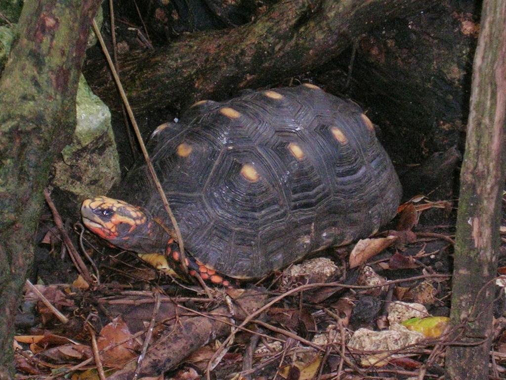 Elämäni paras lomamatka Barbados Wild Life Reserve