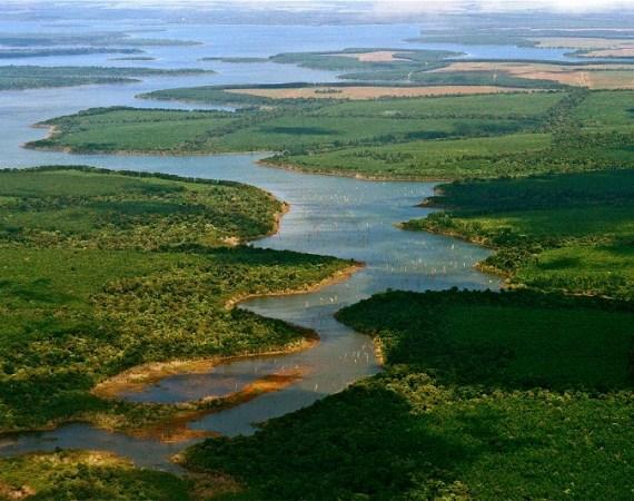 Els aiguamolls de l'Amèrica del Sud