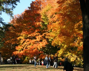 2008-10-26 (arbres a Central Park)