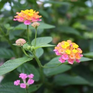 2009-08-19 (flors)