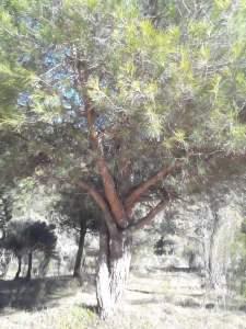 árbol entrelazado small