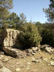 árbol en piedra