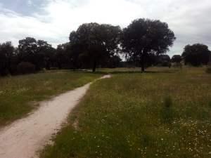 camino small