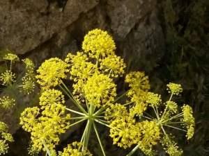 flor amarilla small