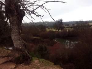 árbol al borde del río s