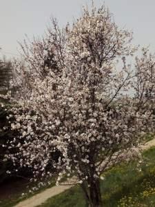 árbol en flor s