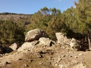 rocas y árboles s