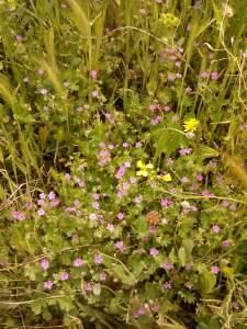 flores del campo s