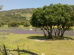caballos entre las flores s