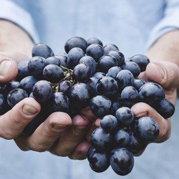 History - Purcari - Grapes
