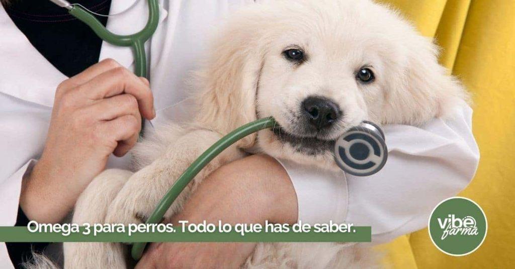 Omega 3 para perros