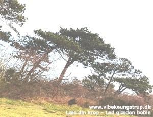 Rødderne blev revet væk under mig | Om at være et træ | Vibeke Ungstrup Clairvoyant & Healer