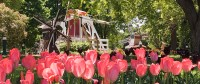 Orange City Tulip Festival  Vibrant Orange City, Iowa