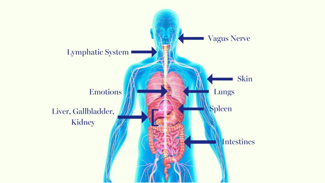 Open 10 Detoxification Pathways with Essential Oils