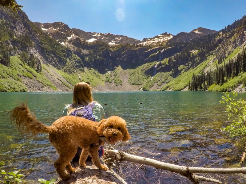 dog friendly, north cascades national park, rainey lake, hiking with pets, gorgeous views