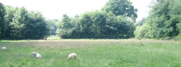 Zicht vanaf Landgoed Mentink, nabij kruising Grotersweg, spoorlijn naar Groenlo en het oude spoor (nu wandelpad). G2