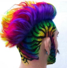 Rainbow Colored zebra mohawk